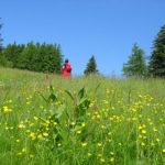 Im Frühtau zu Berge wir ziehn vallara - auf die Mönichkirchner Schwaig